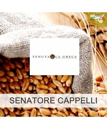 "5 kg altes sizilianisches Mehl wie ""Senatore Cappelli"""