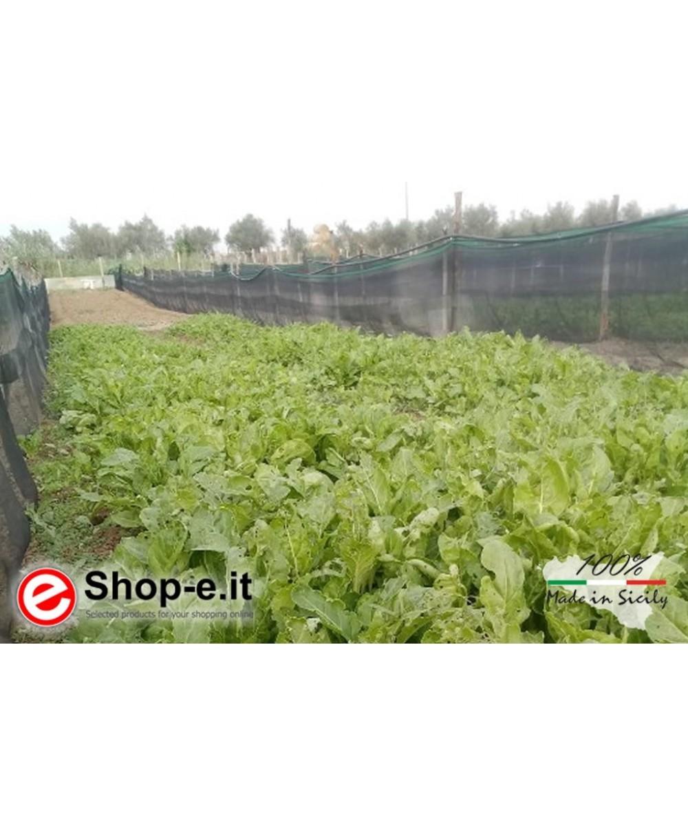 Gastronomische Schnecken Helix Aspersa Aspersa 5 Kg ca