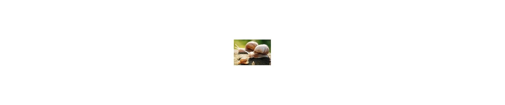 Online sales of gastronomic snails